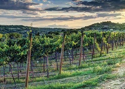 Wijnreis Bologna, Emilia-Romagna