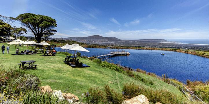 Cape point vineyards