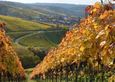 Wijnreis Duitsland: Mosel, Pfalz, Würtemberg en Rheinhessen 3 t/m 6 juni 2018