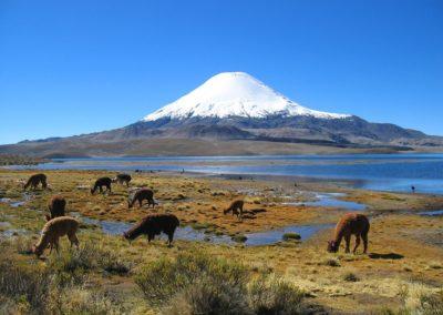 Exclusieve wijnstudiereis Chili & Argentinië 2019